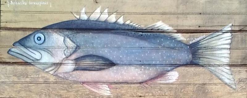 Pescado sobre madera