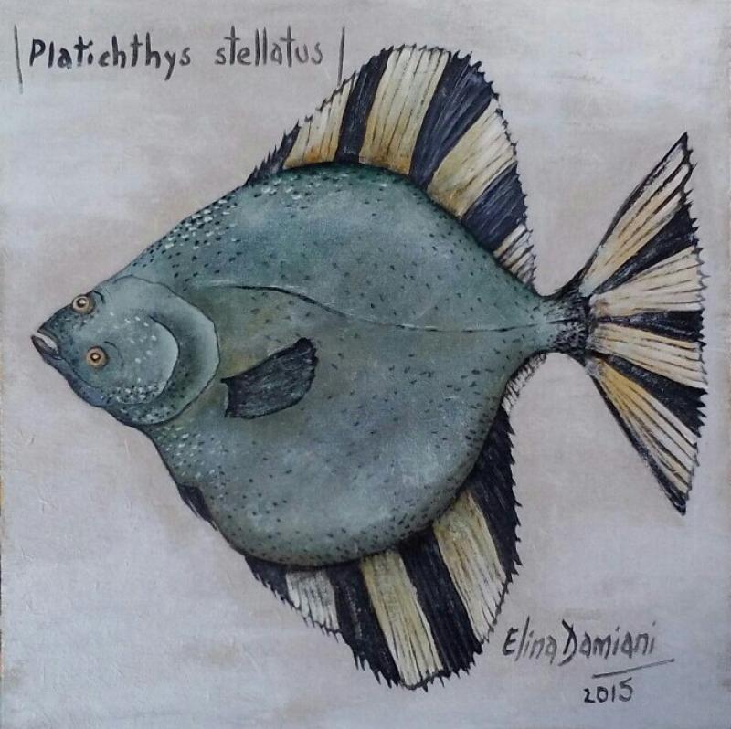 Platichthys stellatus