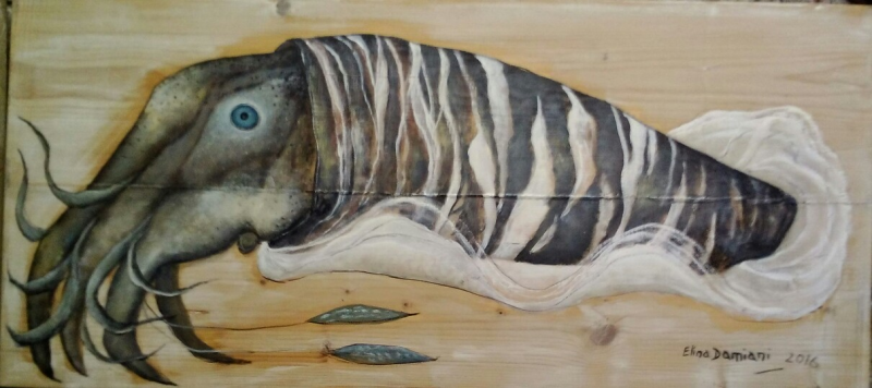 Animal marino, cepia